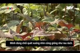 clip-gia-rau-sach-dung-choi-quet-cho-rau-rach-giong-sau-an