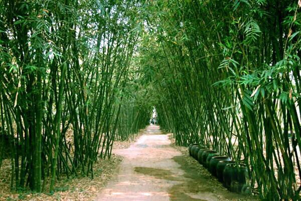 Làng tre Phú An - Địa điểm du lịch Bình Dương hấp dẫn