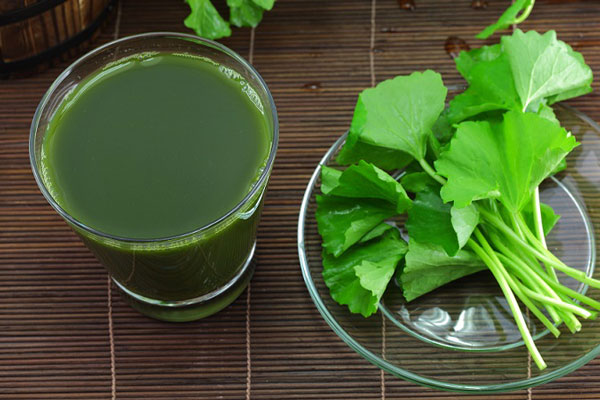 Mỗi ngày uống khoảng 1 ly nhỏ nước rau má sẽ tốt cho mẹ bầu