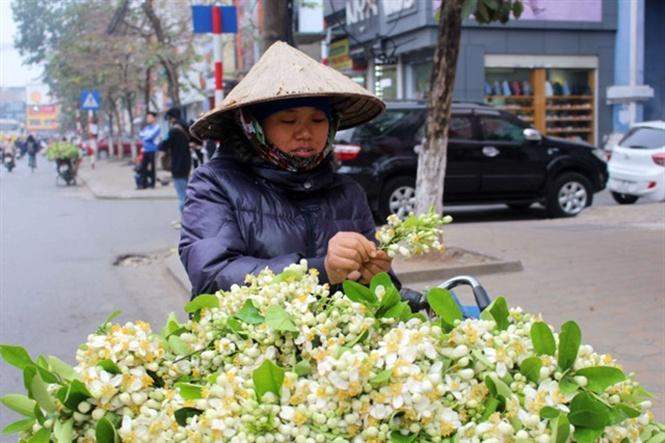 chuyen-gia-dong-y-mach-nuoc-bai-thuoc-chua-benh-tu-hoa-buoi-1