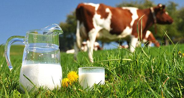 Sữa là nguồn thực phẩm hỗ trợ phát triển chiều cao tuổi dậy thì hiệu quả