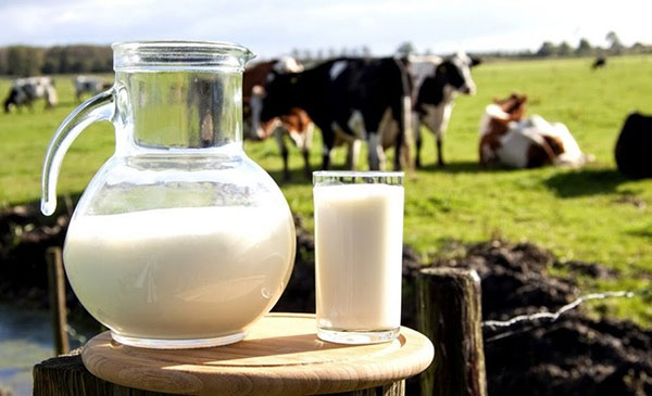 Sữa hoàn nguyên không phải sữa nguyên chất
