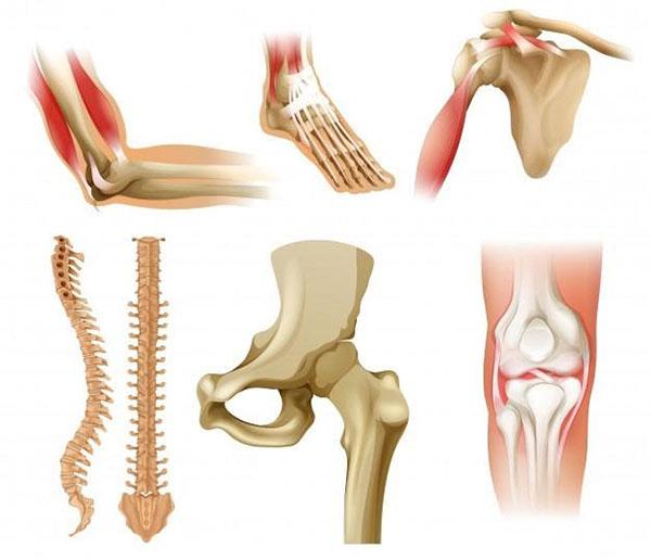 Quá trình tạo xương mới cần rất nhiều chất dinh dưỡng