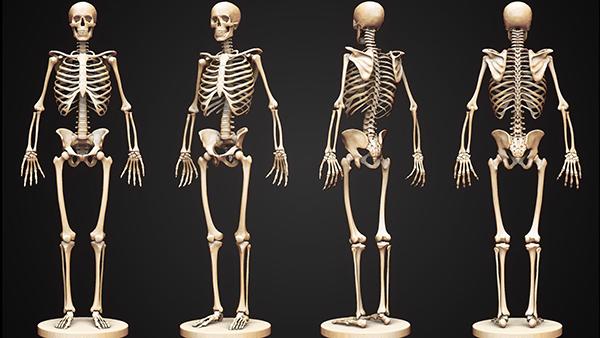 Canxi đóng vai trò quan trọng trong việc hình thành và phát triển của hệ xương, răng và móng