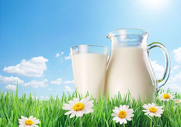 Sữa bò hỗ trợ phát triển chiều cao hiệu quả sau tuổi dậy thì